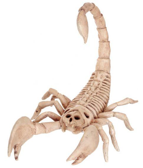 Skorpion skelet