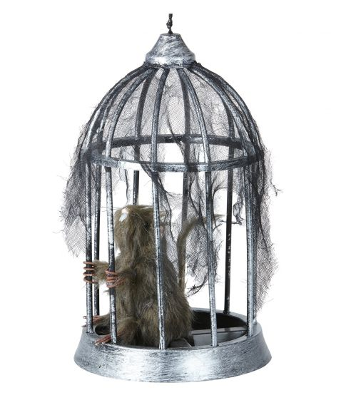 Rotte i bur