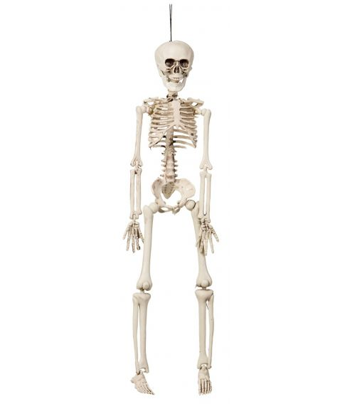 Hængende skelet, 42 cm.