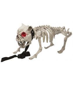Skelet hund med lyd
