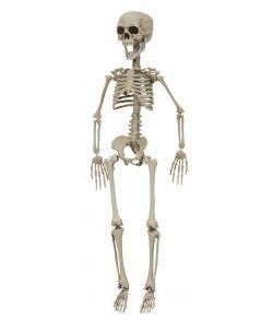 Skelet, 76 cm