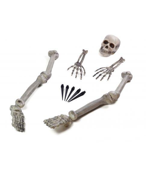 Skelet groundbreaker