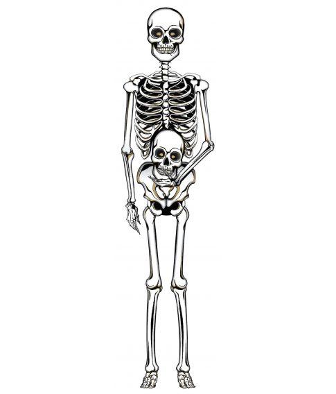Pap skelet, 152 cm