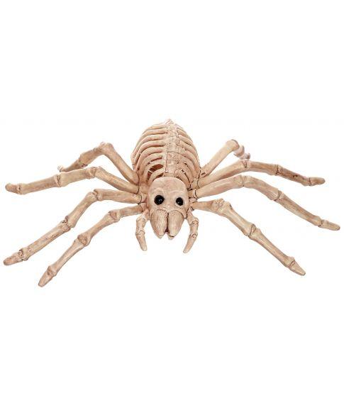 Edderkop skelet