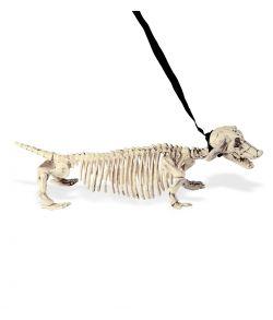 Gravhund skelet
