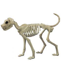 Buster skelet