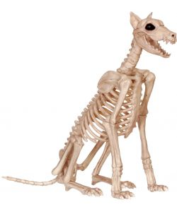 Dobermann skelet
