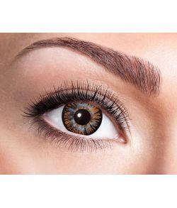 Linse Big Eye brun