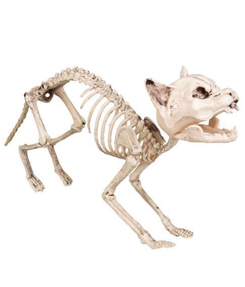 Katteskelet 60 cm