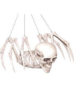 Skelet edderkop med kranie