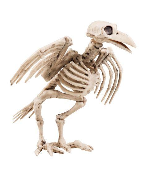 Krage skelet, 19 cm