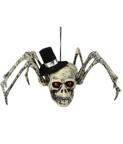 Edderkop med kranie