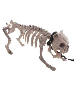 Hunde skelet i plastik med halsbånd og hundesnor.