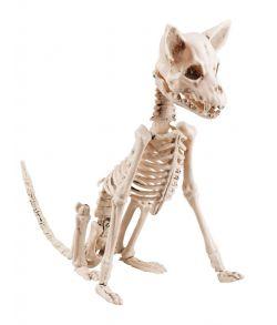 Siddende hund skelet i plastik.