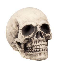 Kæmpe halloween kranie, skum