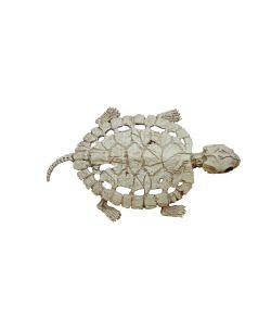 Skildpadde skelet i plastik.