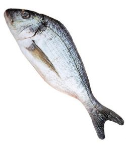Blød fiskebamse med fotorealistisk print