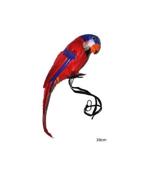 Papegøje, 38 cm