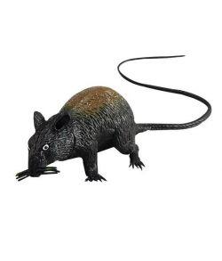 Pibende rotte