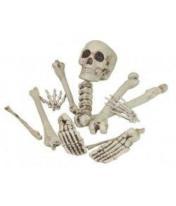 Kranier & Skeletter